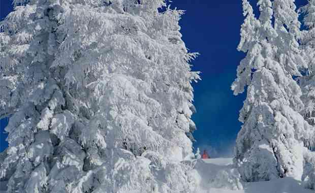 So viel Schnee, gibt's das? Powderchase Zauchensee